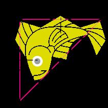 non-periodic fish